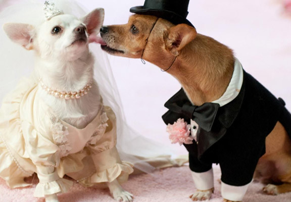 wedding_dog-sitter-core-eventi