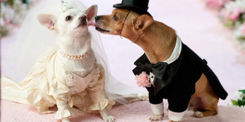 wedding_dog-sitter-core-eventi