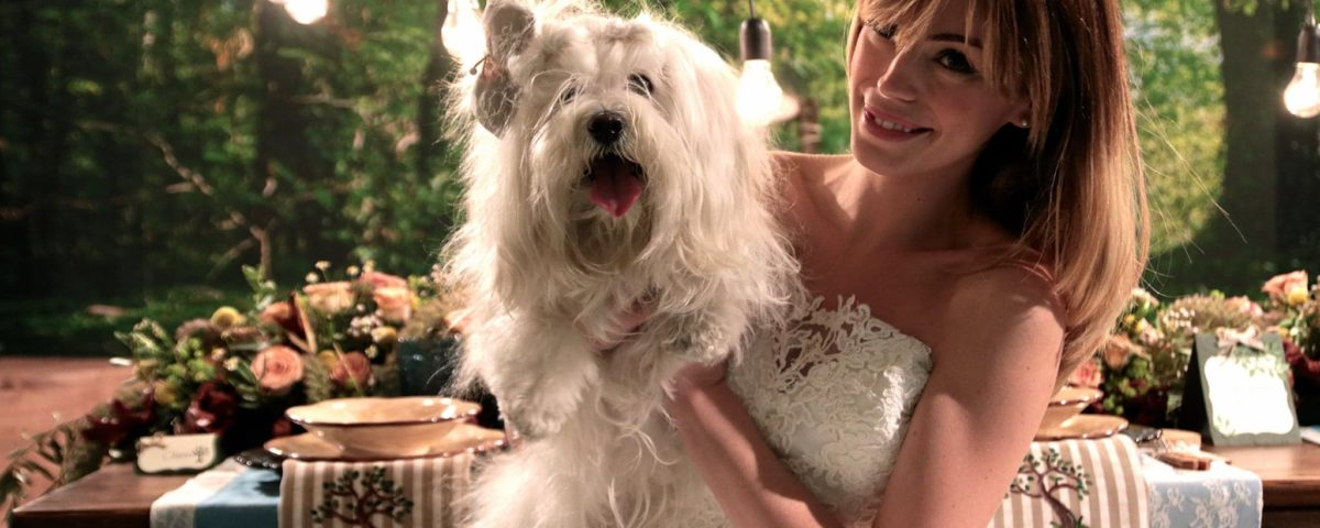 wedding_dog_sitting_CoRe_Eventi